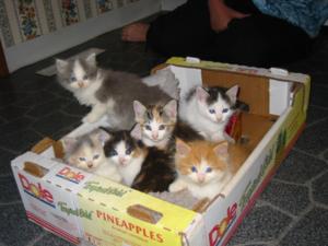 Kittens_2